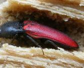 Come gli insetti  sopravvivono all'inverno